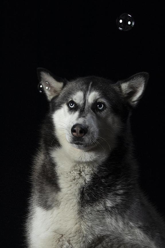 foto cani como studio