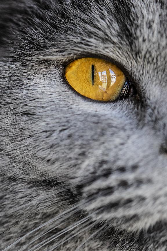 fotografo gatti como