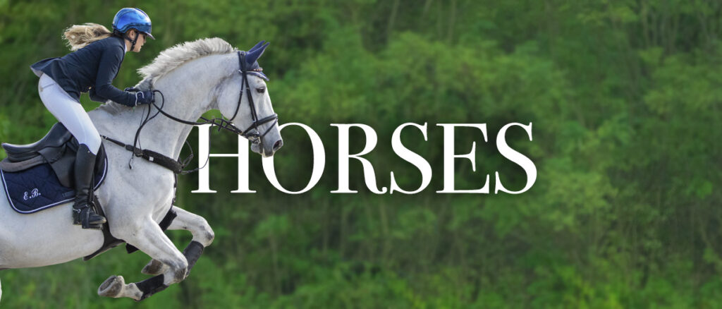 cavalli fotografo